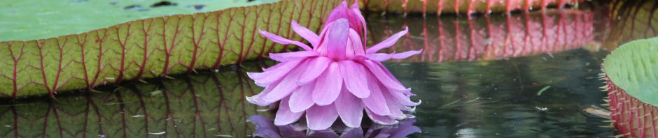 cropped-big-lotus-mirror.jpg